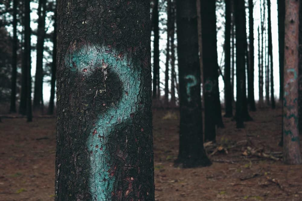 Question marks on trees